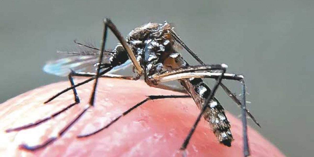 São Paulo promove Semana de Mobilização de Combate ao Aedes Aegypti